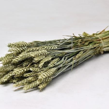 Wohnlust - Weizen Bund